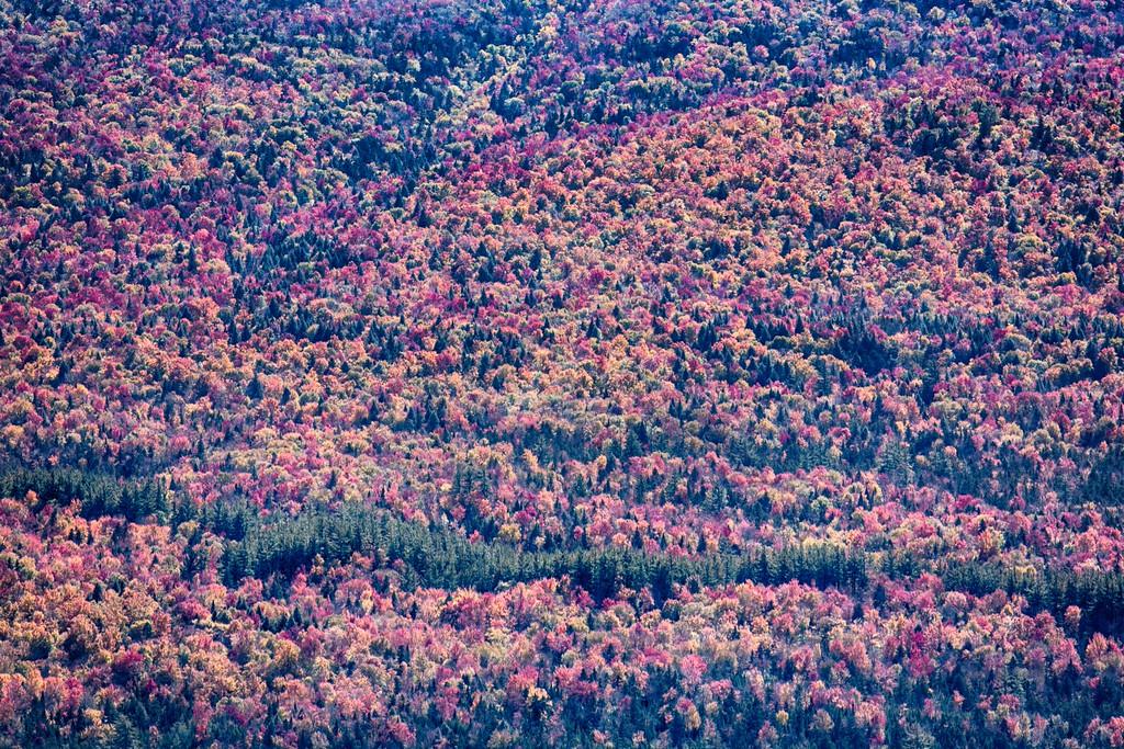 IMAGE: https://harm.smugmug.com/Landscapes/Upstate-NY/i-ZQVMPcs/0/XL/trees-XL.jpg